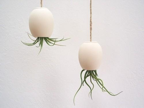 hanging air plant pod